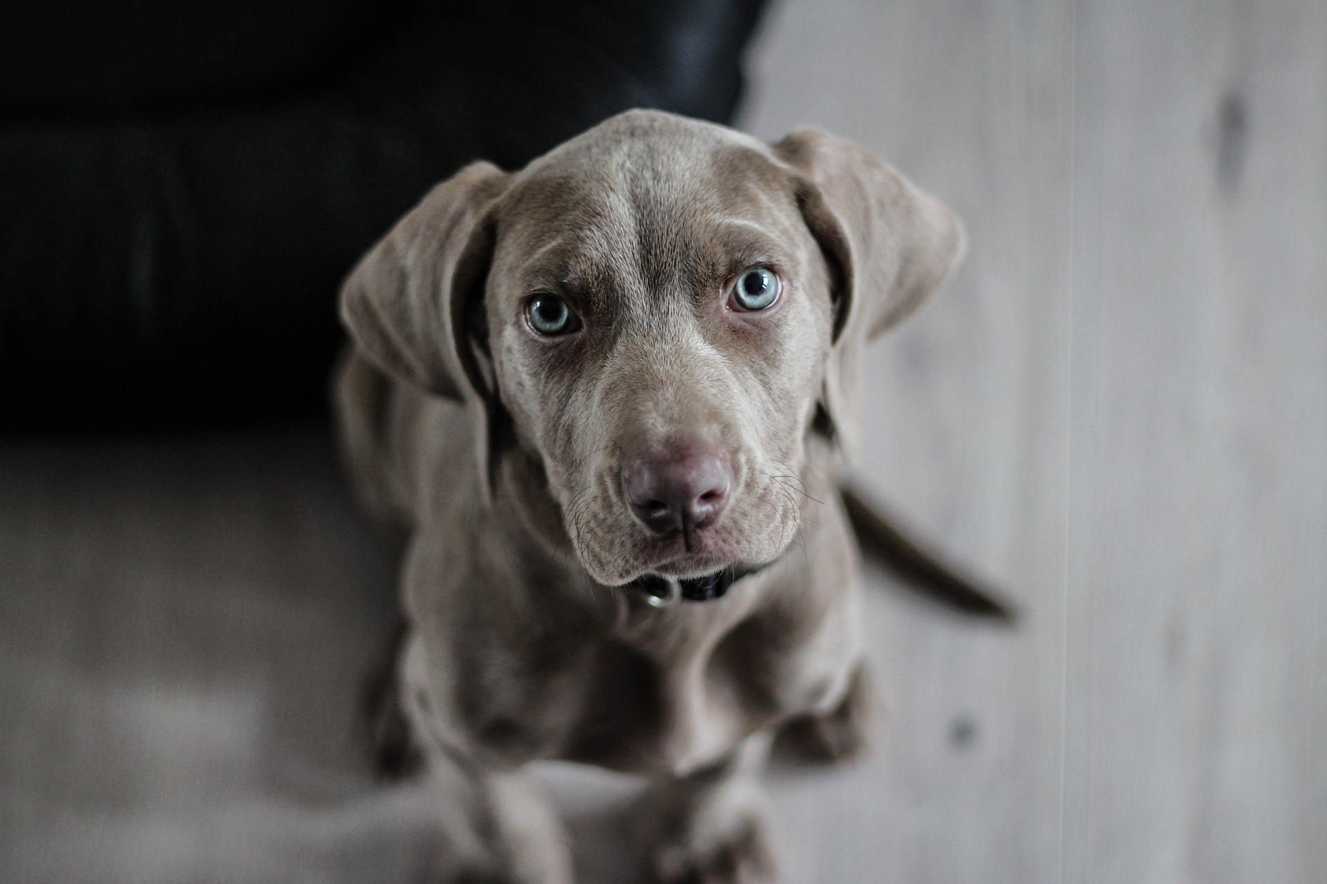 Pies jako koszt uzyskania przychodu